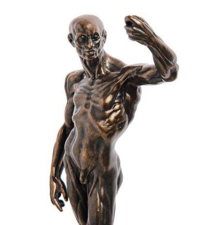 Статуэтка (Anatomical Study.Parastone) pr-HOU01